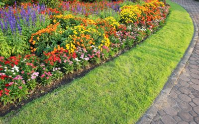 The Beauty of Bedding Plants