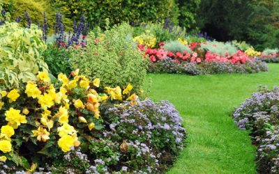 Top Gardening Tips for June