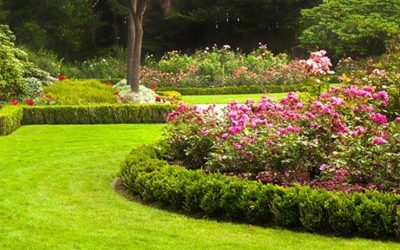 Professional Gardening Services North County Dublin