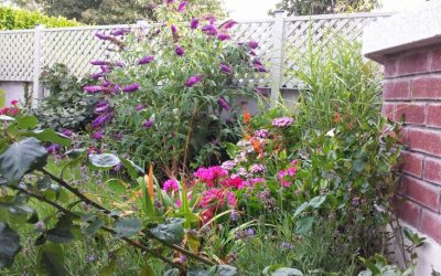 Small Garden Maintenance Services Dublin