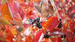Garden Tips November