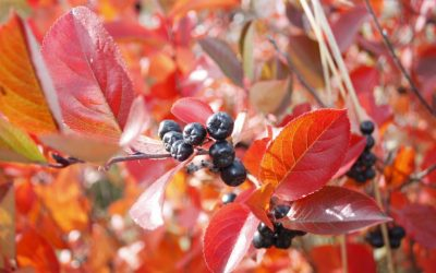 Gardening in November: Tips from Lavin Landscape & Ground Maintenance
