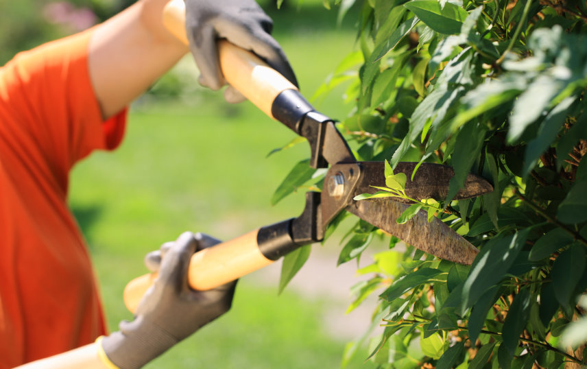 Make Your Garden Great Again with Garden Maintenance Services in Dublin