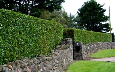 Hedge Cutting Services Dublin