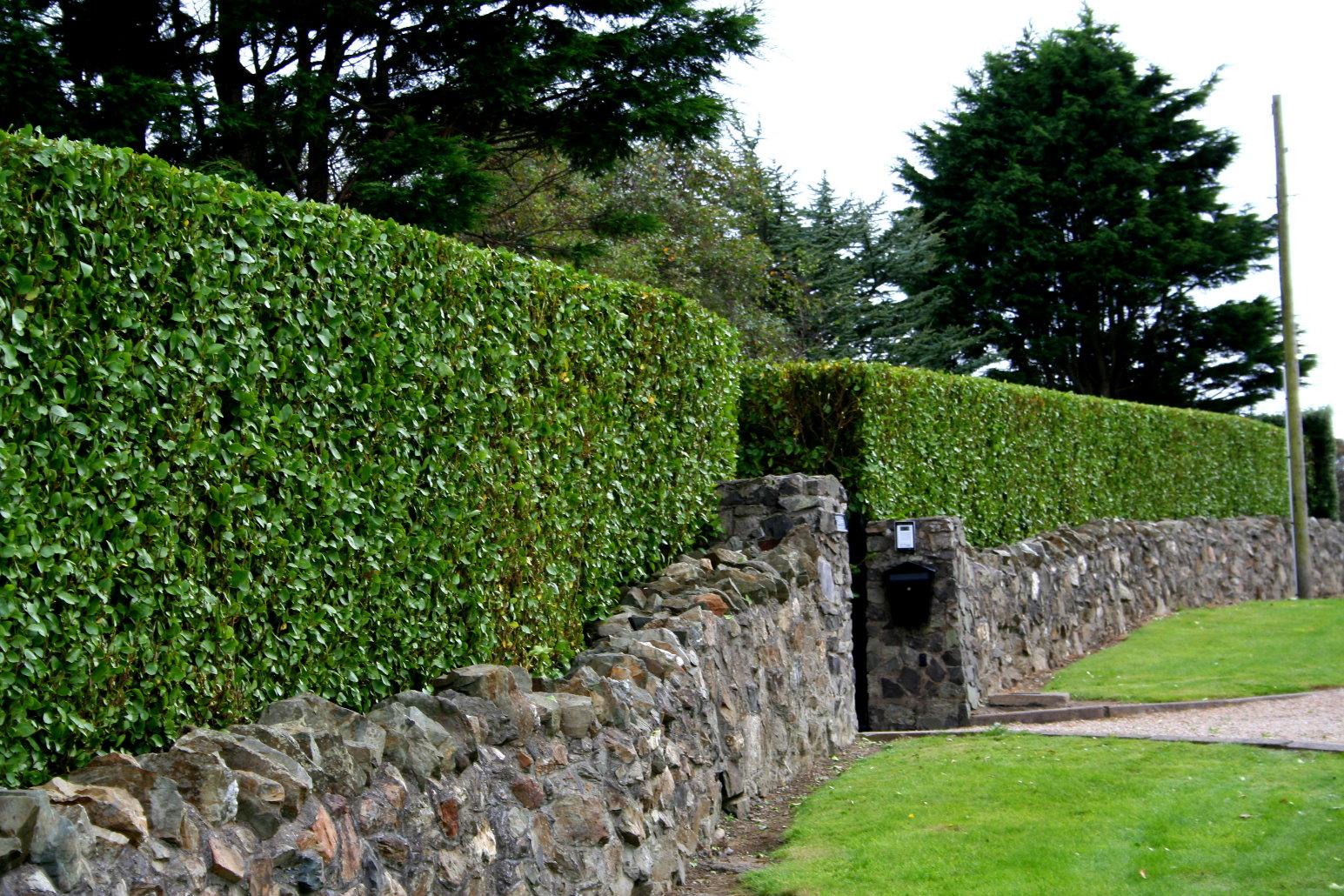 hedge cutting services dublin l hedge trimming dublin l hedges. Black Bedroom Furniture Sets. Home Design Ideas